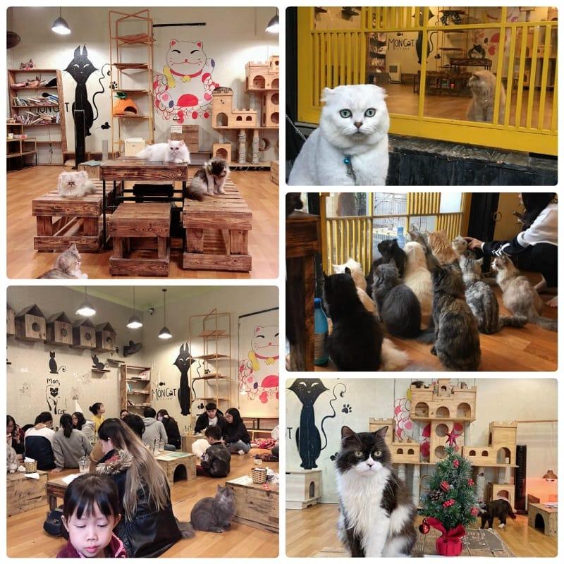 Café Mèo Mon, quán cafe mèo ở Hà Nội đáng yêu nhất