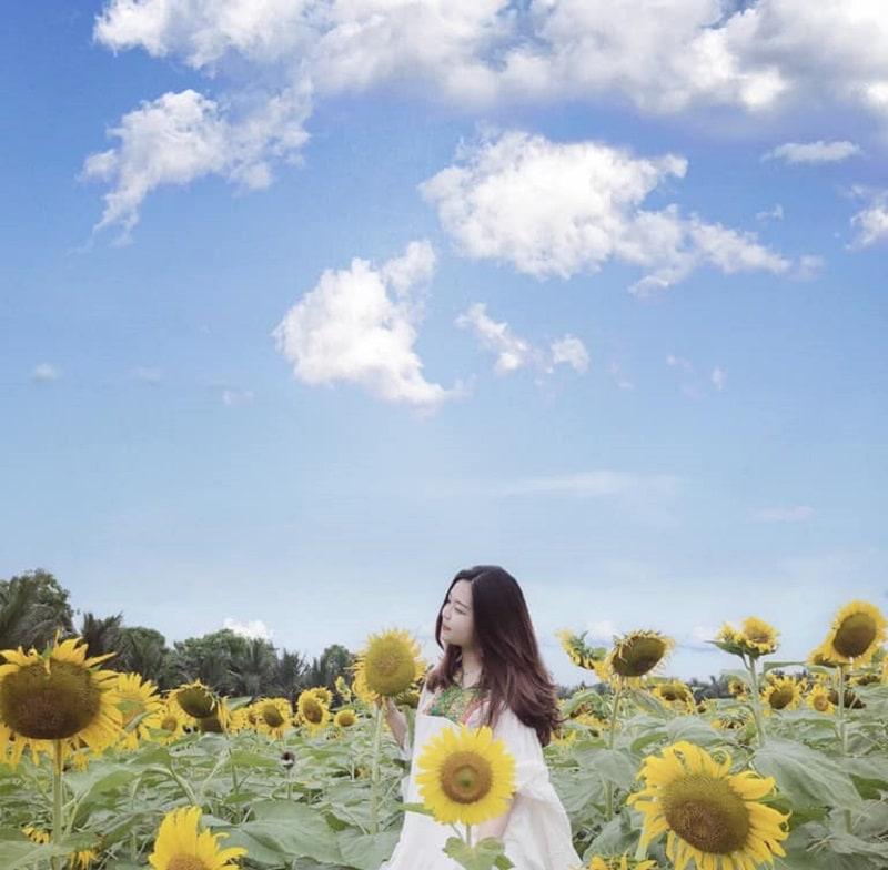 Những cánh đồng hoa hướng dương ở Hà Nội đẹp mỹ mãn. Hà Nội có cánh đồng hướng dương nào không?
