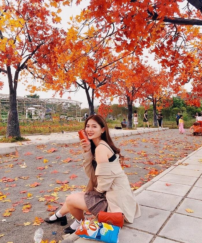 Con đường lá đỏ, lá phong ở Hà Nội tuyệt đẹp check in so deep. Địa chỉ, giá vé, lưu ý đường lá phong lá đỏ ở Hà Nội