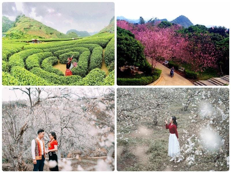 Địa danh đón tết Nguyên Đán gần Hà Nội, Mộc Châu